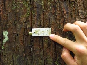 Tree tag on Mo Singto plot
