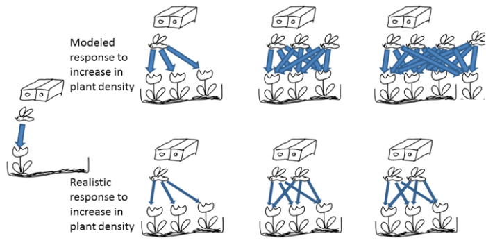 """Figure 2: What happens if plant density is increased? Top row: what (can) happen in many mutualism models; bottom row: what we think has more meaningful dynamics. Both illustrated for the 2-species case.Top row: step1: total service provided by the pollinator strongly (linearly) increases with number of plants; step2: pollinators can exceed K (carrying capacity enforced by other resources, illustrated by trap nests above); step3: plants can exceed K (illustrated by plant box below); total interaction strength can reach weird level (""""mutualism party"""").Bottom row: step1: pollinator visits are distributed among more flowers, i.e. competition for pollinators increases among plants; step2: more floral resources per pollinator lead to an increase in pollinator population, within the bounds of K; step3: the increase of pollinator pollinations cannot increase plant populations above the limit set by K."""